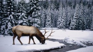 sneeuw-wintersport
